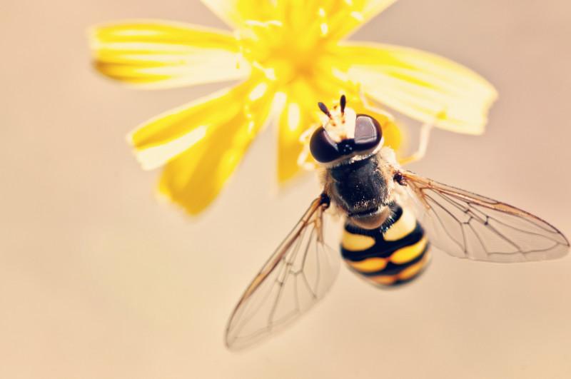 antenna-bee-bloom-395241-2331